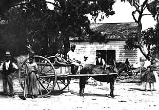 freedmen work on Edisto Island, SC
