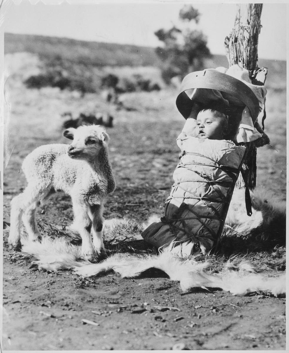 Navajo papoose on a cradleboard with a lamb approaching, Window Rock, Arizona,1936.