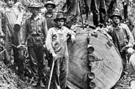 harvesting spruce for World War I