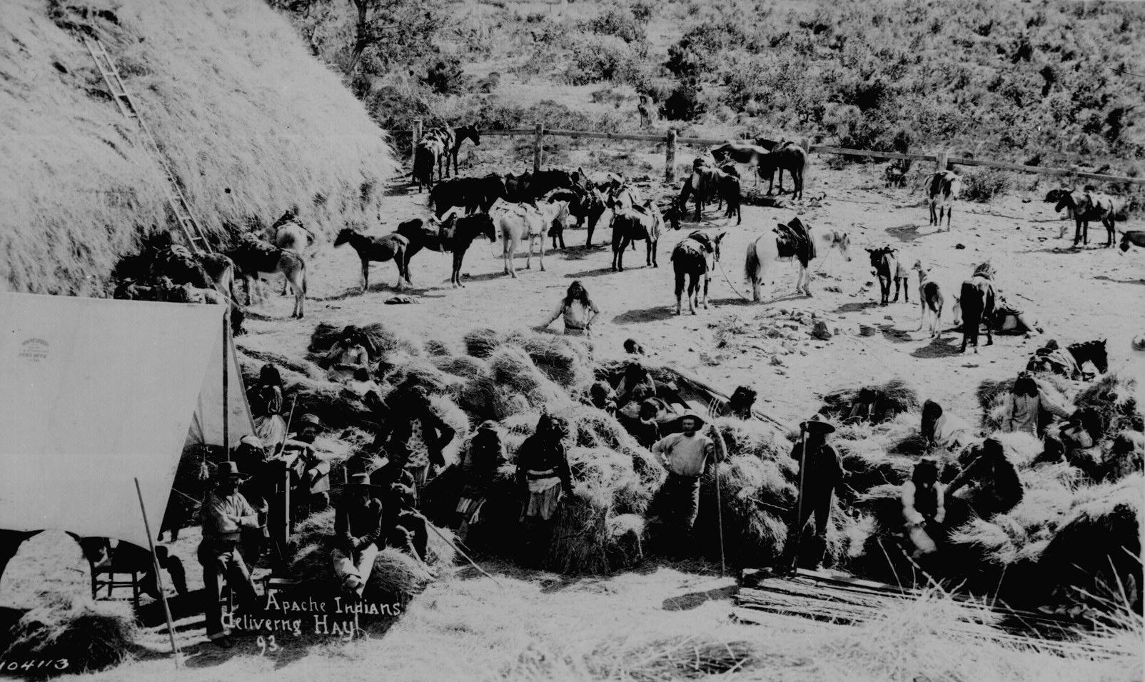 75 apache indians delivering hay fort apache ariz 1893 111