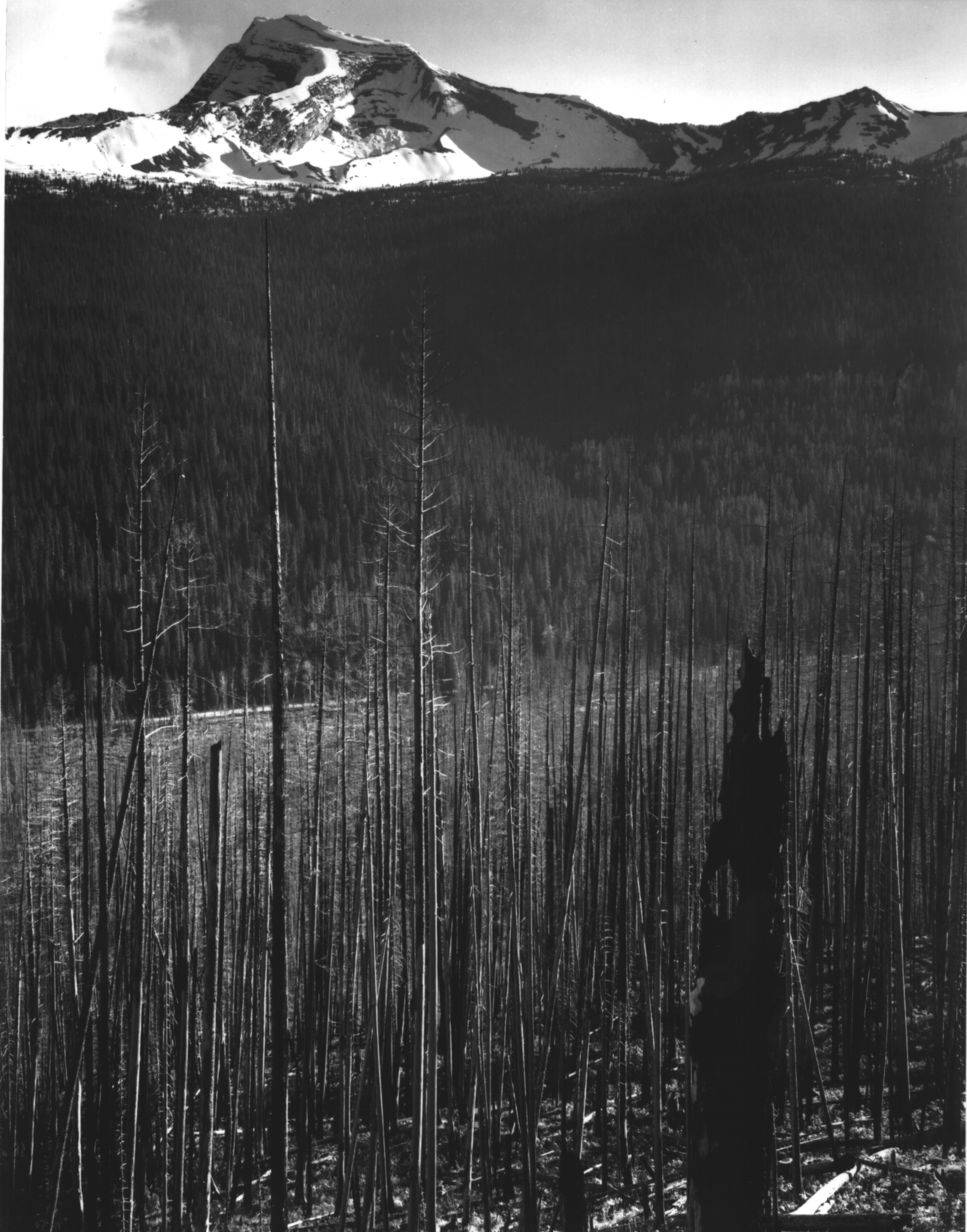 Ansel adams photographs national archives